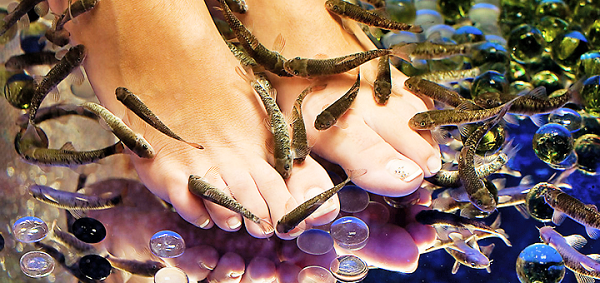 Пилинг рыбками Гарра Руфа — особенности процедуры, польза, вред. Как проводится пилинг рыбками лица и тела. Как называются рыбки ,которые делают пилинг. Пилинг рыбками Гарра Руфа