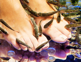 Миниатюра к статье Пилинг ног рыбками: описание процедуры, эффект